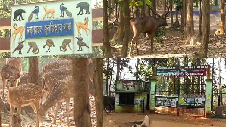 ঝাড়গ্রামের জুলজিক্যাল পার্কে বাড়তি হরিণদের রেসকিউ সেন্টারে নিয়ে যাবার ভাবনা বনদফতরের