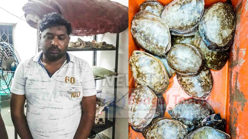 আন্তর্জাতিক কচ্ছপ পাচার চক্র ধরা পড়লো সিআইডি-র জালে
