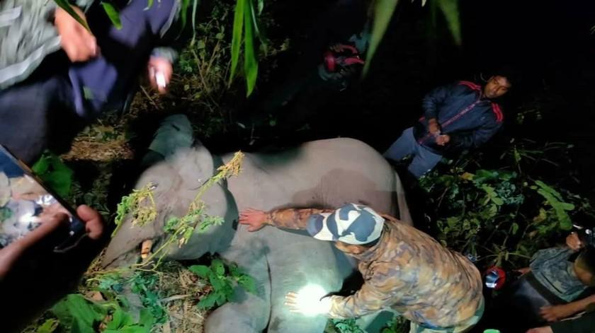 চোখের সামনে সন্তানকে সজোরে ধাক্কা চলন্ত গাড়ির, ক্ষিপ্ত মা হস্তিনী